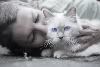 Cat-1423844_1920